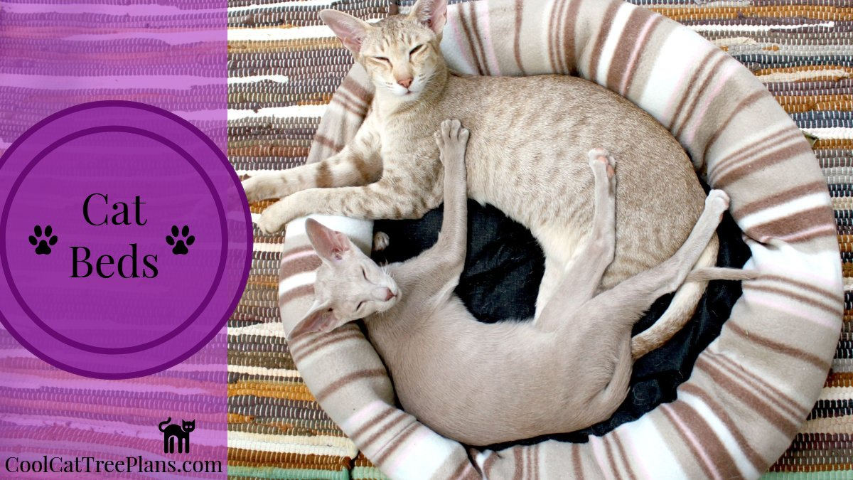 Cool Cat Beds Are One Of Those Things That Every Owner Needs Plenty Fun Functional And Inexpensive They A Great Way To Shower Your Kitty With