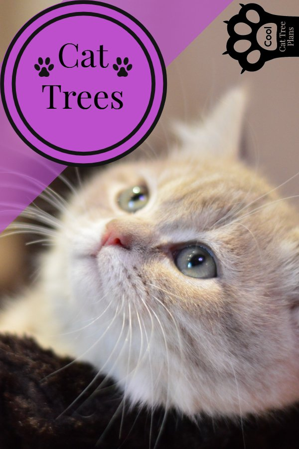 Cat trees are really good for your kitty, they give both mental and physical enrichment!