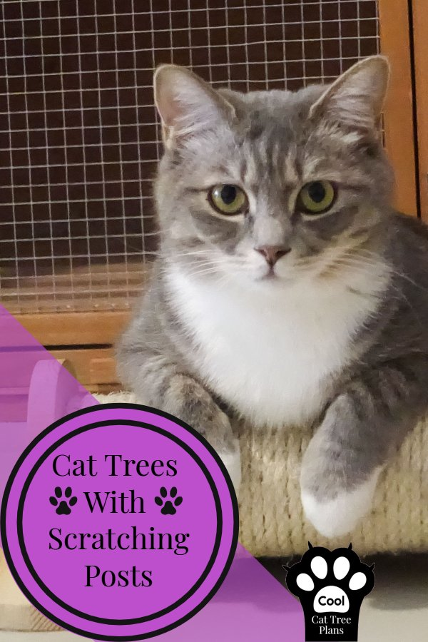 Cat trees with scratching posts help curb your kitties need to scratch and can even help save your couch!