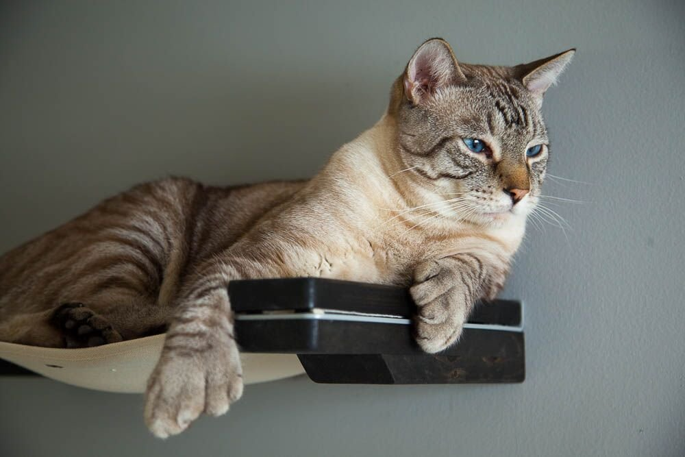 Stylish Wall Mounted Cat Hammock - We love this wall mounted cat perch!  But if you're looking for a cat perch with pretty silk leaves, a curved mahogany cat shelf with replaceable carpet, wall mounted sisal post with cat perches or a wall mounted cat lounger with fabric ramp this post features those too.