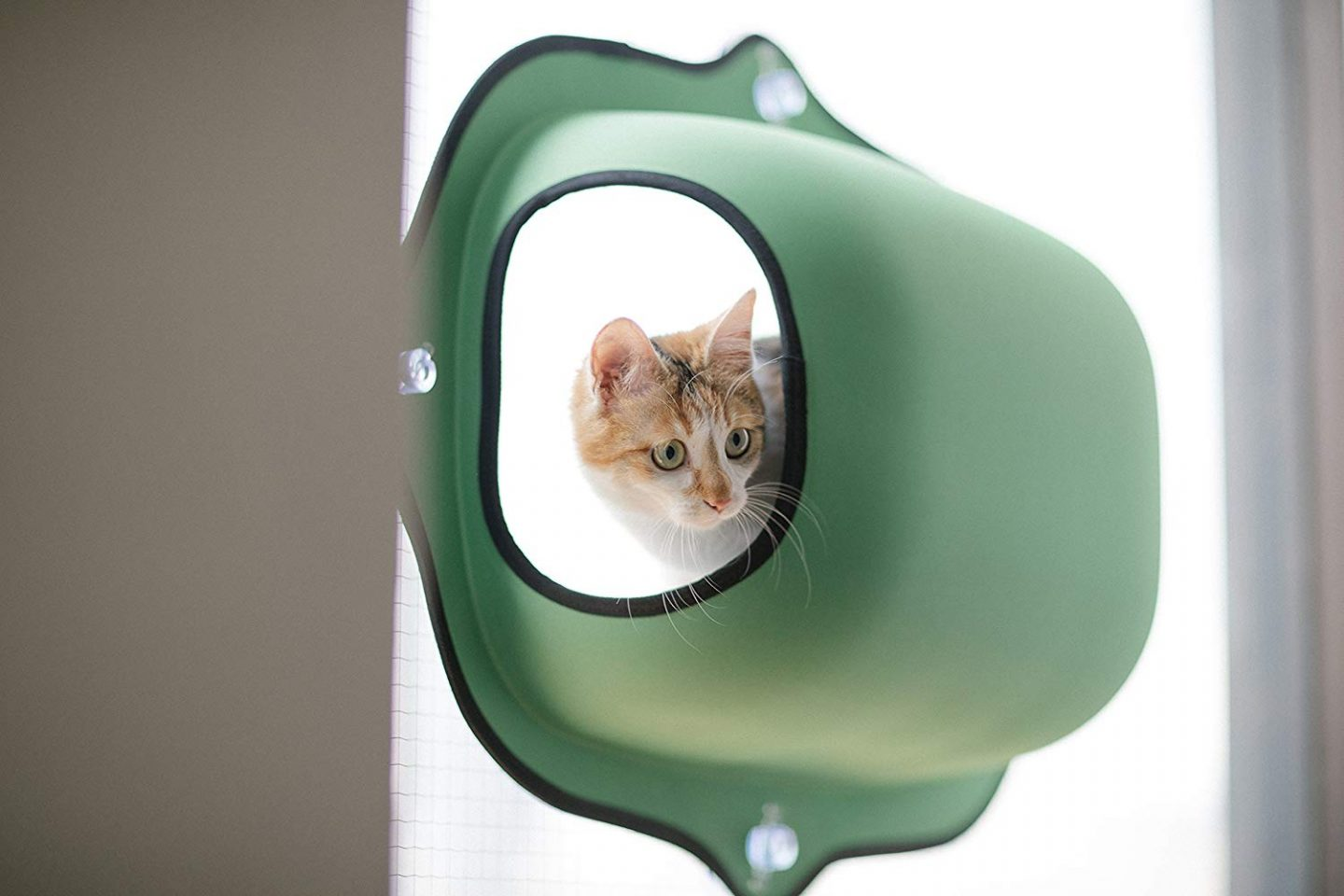 An enclosed window mounted cat pod.  I'm not sure how I didn't know about kitty pods sooner, but these are way to cool!