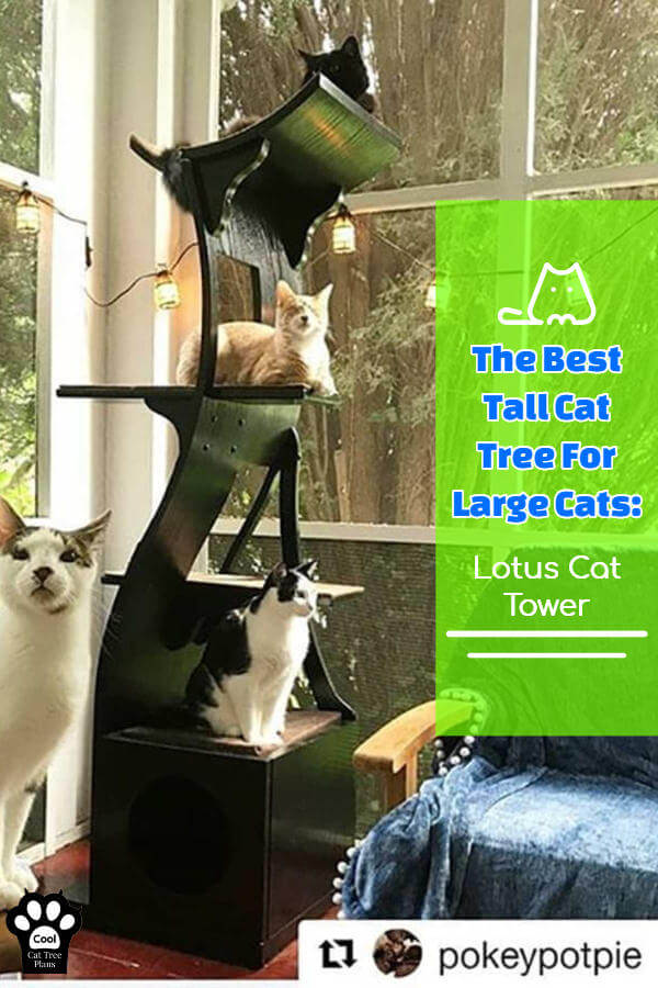 The best tall cat tree for large cats has a cat condo, multiple platforms, is made from solid wood and has removable carpet pads on the steps to make cleaning easy.  And it's just under 6 feet tall.