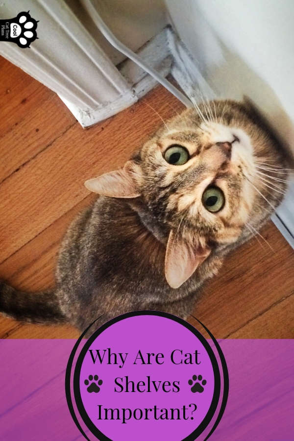 The Ultimate Guide To Cat Shelves Cool Cat Tree Plans