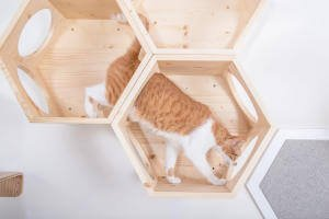 You can easily see how you can turn these hexagonal, honeycomb like cat shelves into a maze-like romping area for your cat!