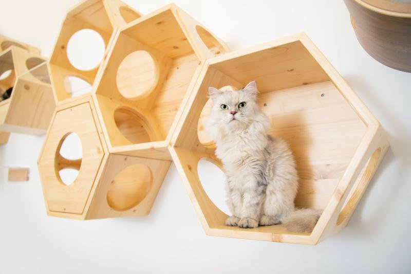 Here is a slightly larger cat enjoying these sturdy hexagonal cat shelves from MyZoo!