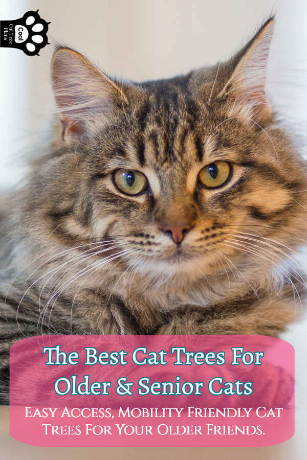 The Best Cat Tree For Older Cats