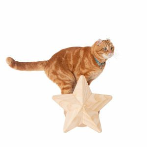 A happy cat showing off how strong the Twinkle Star cat shelf is by putting their full weight on it.